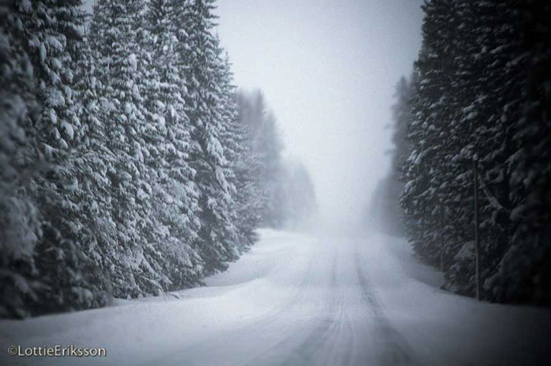 snowy_forest_road